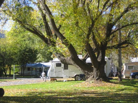 Tumbarumba Creek Caravan Park - WA Accommodation