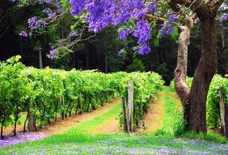 Bago Vineyards - WA Accommodation