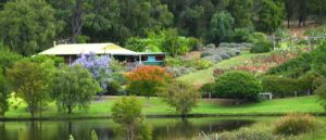 Lavender and Berry Farm - WA Accommodation