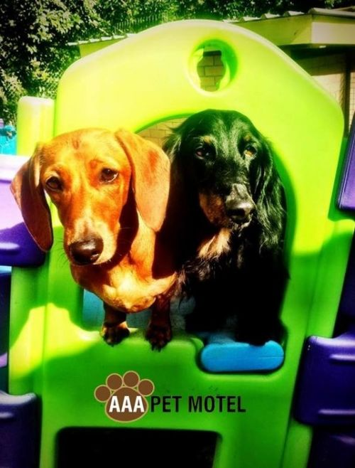 AAA Pet Motel - WA Accommodation