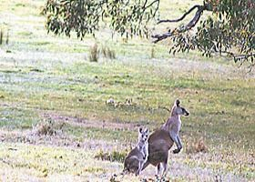 Kangaroo Ridge Retreat - WA Accommodation
