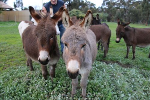 Donkey Tales Farm Cottages - WA Accommodation