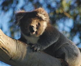 Bimbi Park Camping Under Koalas - WA Accommodation
