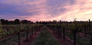 Milawa Vineyard Views - WA Accommodation