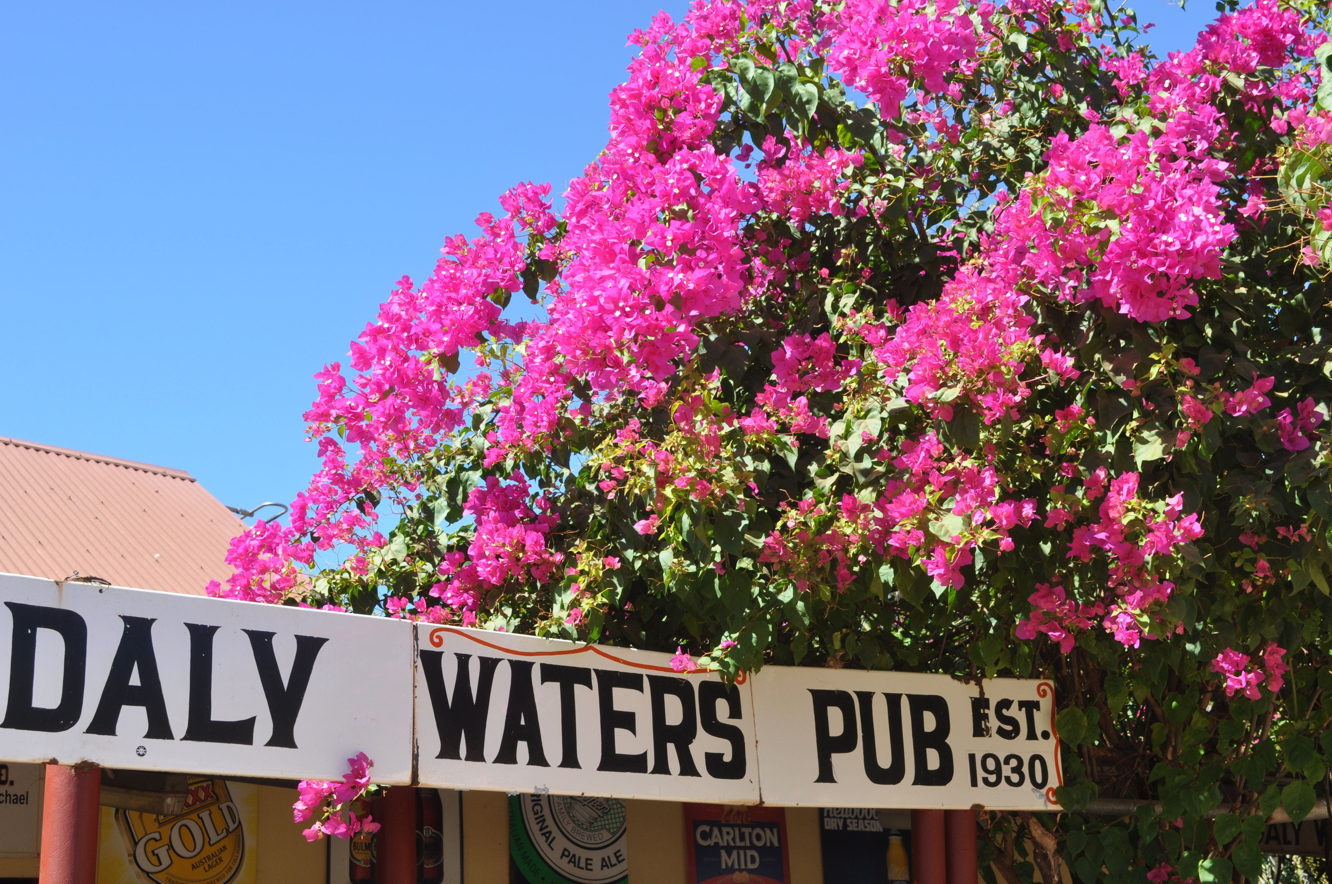 Daly Waters Historic Pub - WA Accommodation