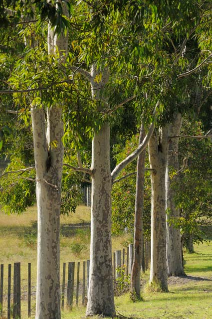 Stringybark Cottages - WA Accommodation