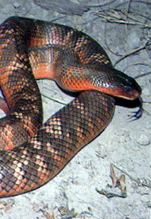 Armadale Reptile  Wildlife Centre - WA Accommodation