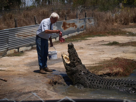 Koorana Saltwater Crocodile Farm - WA Accommodation