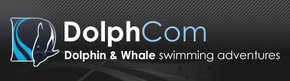 Dolphcom - Dolphin  Whale Swimming Adventures - WA Accommodation