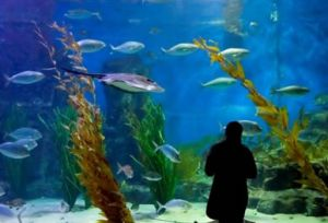 Melbourne Aquarium - WA Accommodation