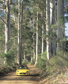 Scotsdale Tourist Drive - WA Accommodation