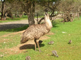 Minlaton Fauna Park - WA Accommodation
