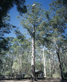 Diamond Tree Lookout Manjimup - WA Accommodation