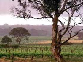 Yangarra Estate Vineyard - WA Accommodation