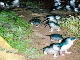 Penneshaw Penguin Centre - WA Accommodation