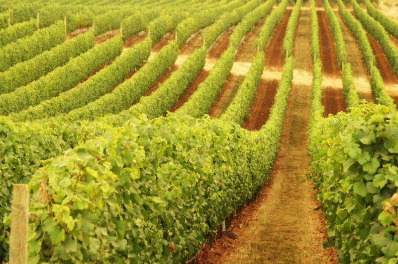 Schild Estate Wines - WA Accommodation