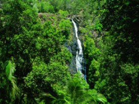 Kondalilla National Park - WA Accommodation