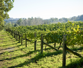 Surveyor's Hill Vineyards - WA Accommodation