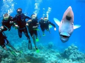 Magic Mountain Dive Site - WA Accommodation
