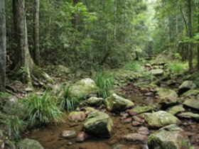 Amamoor State Forest - WA Accommodation