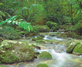 Mossman Gorge Daintree National Park - WA Accommodation