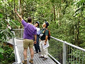 Daintree Discovery Centre - WA Accommodation