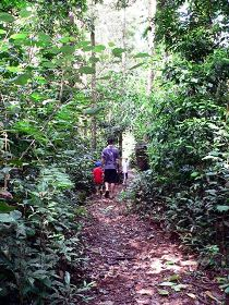 Malanda Falls Rainforest Walk Malanda Falls Conservation Park - WA Accommodation