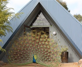 Halls Gap Zoo - WA Accommodation