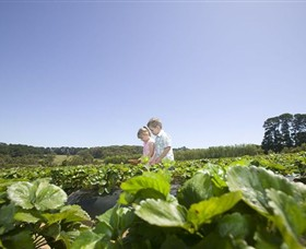 Sunny Ridge Strawberry Farm - WA Accommodation