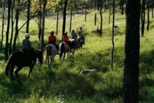 Hunter Valley Horse Riding and Adventures - WA Accommodation