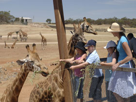 Monarto Open Range Zoo - WA Accommodation