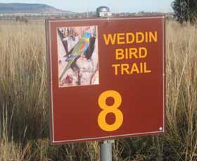 Weddin Bird Trails - WA Accommodation
