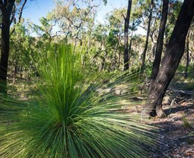 Brisbane Ranges National Park - WA Accommodation