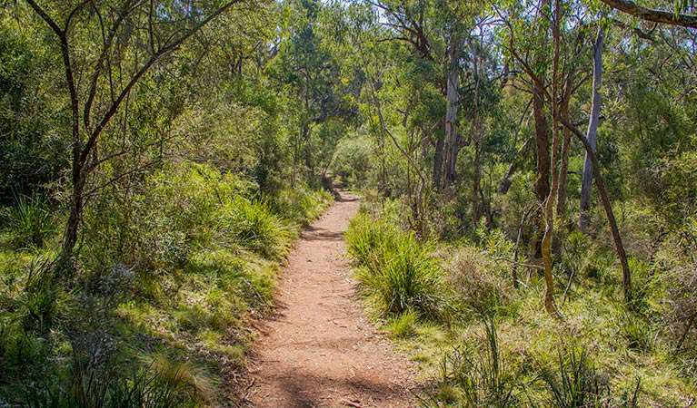 Mares Forest Creek walking track - WA Accommodation