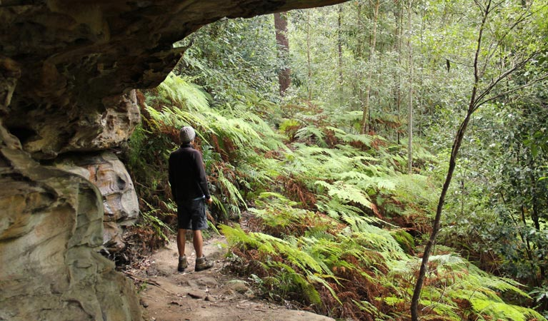 Dharug National Park - WA Accommodation