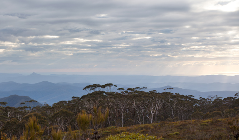 Mount Budawang trail - WA Accommodation