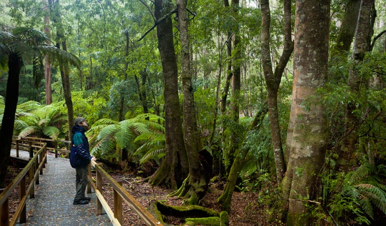 Monga National Park - WA Accommodation