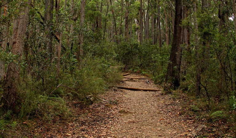 Pigeon House Mountain Didthul walking track - WA Accommodation