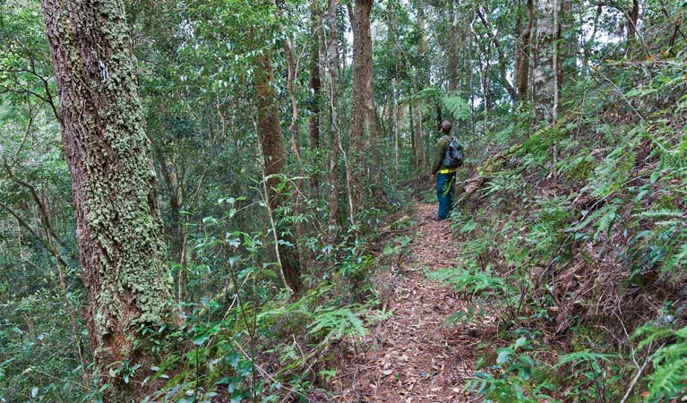 Blackbutt walking track - WA Accommodation