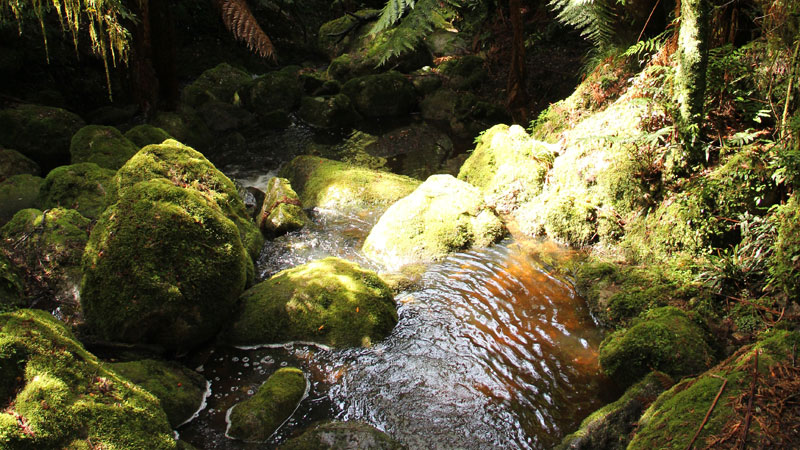 South East Forests National Park - WA Accommodation