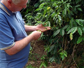 Wombah Coffee Plantation - WA Accommodation