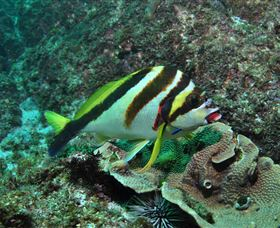 Palm Beach Reef Dive Site - WA Accommodation