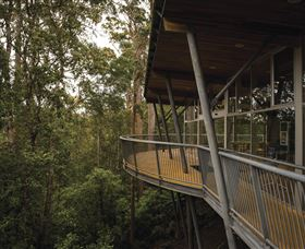 Tarkine Forest Adventures - Dismal Swamp - WA Accommodation