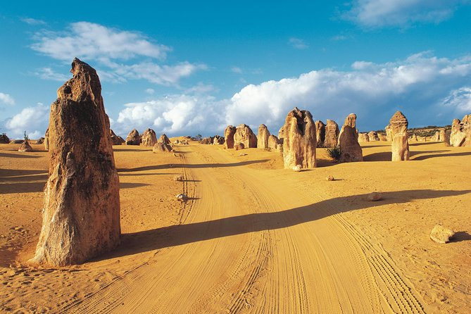 Pinnacles Desert Koalas and Sandboarding 4WD Day Tour from Perth - WA Accommodation