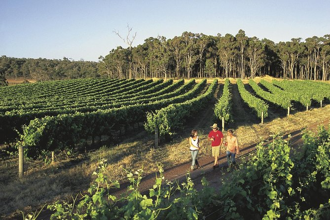 Margaret River Caves Wine and Cape Leeuwin Lighthouse Tour from Perth - WA Accommodation