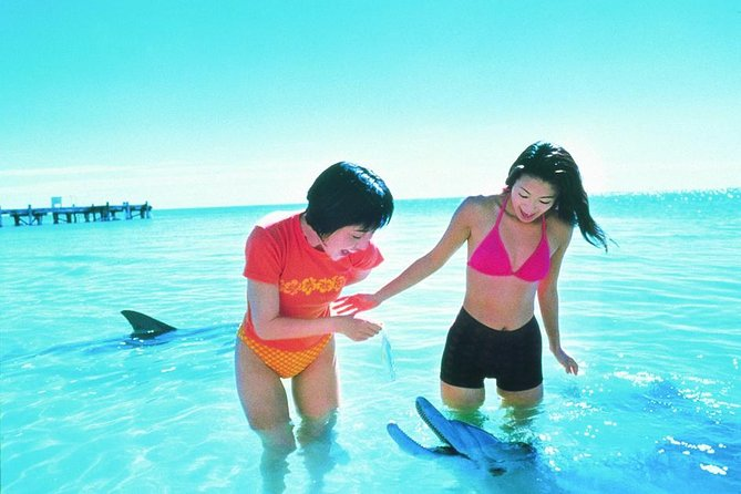Monkey Mia Dolphins  Shark Bay Air Tour From Perth - WA Accommodation