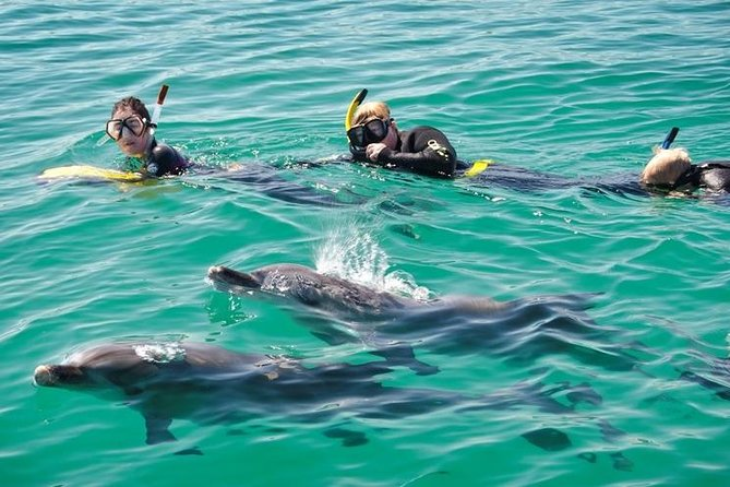 Swim with Dolphins Day Trip from Perth - WA Accommodation