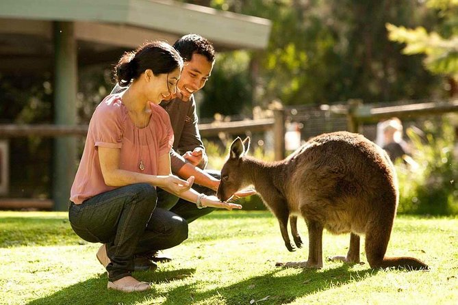 Very Best of Perth Tour - Wildlife Park  City Highlights Tour - WA Accommodation