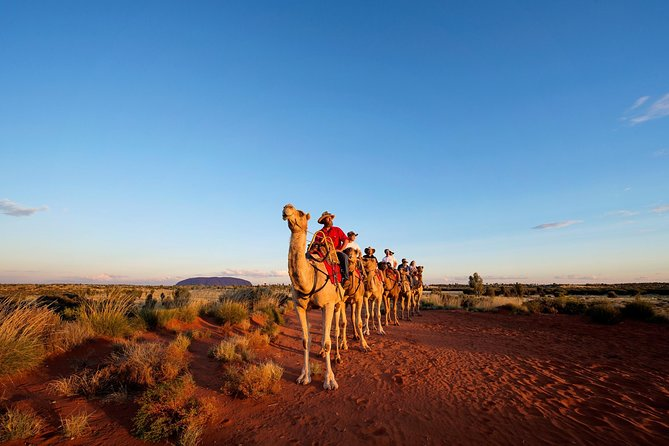 Uluru Camel Express Sunrise or Sunset Tours - WA Accommodation