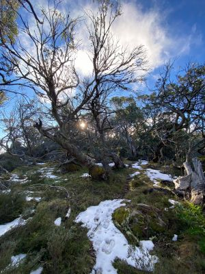 Mount Torbreck Summit Walk - WA Accommodation